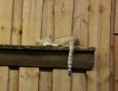 Tallinna4 (elinalaurila) Tags: animal zoo tallin estonia