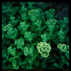 emerald green (derek*werner) Tags: rolleiflex rollei rolleinar fuji fujifilm film velvia rvp 50 epson gtx980 v850 plant slide tianjin tientsin