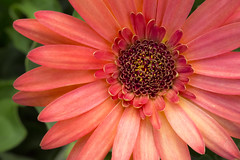 7P7A4769-Edit (Mark Ritter) Tags: floral flora flowers closeup macro nature garden
