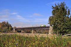 1216 954 (Hödlmayr) (René Große) Tags: eisenbahn train railways brücke bridge eisenbahnbrücke güterzug zug lokomotive lok elok taurus siemens 1216 hödlmayr regensburg donau prüfening bayern deutschland germany wlb wlc