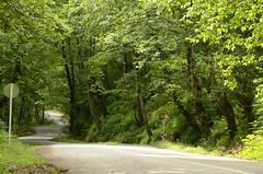 A bend (Alish.Y) Tags: masal iran yasser alishahi jangal derakht pech bend forest rasht