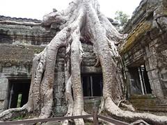 Die Natur schlägt zurück (schaffer.walter) Tags: kambodscha