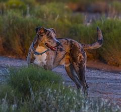 20170712-20170712-_DSC4844_ (michaelleejackson) Tags: happydog zion nationalpark utah