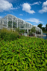 Pesricaria, Wisley glasshouse (tonybill) Tags: flowers fujifilmxt2 fujinonxf14mmf28 gardens iridientxtransformer july miscellaneous rhs rhswisley sunshine surrey wisley bokeh