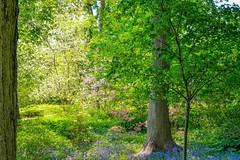 Springtime at Longwood Gardens (Beangrau12) Tags: springtime longwoodgardens flowers trees colorful