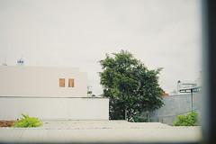 Afternoon #SonyA7rII #Film #Tree (hersheyapril) Tags: film tree sonya7rii