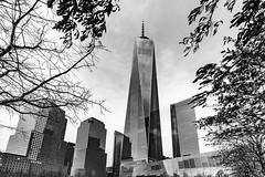 One World Trade Center, New York, USA (Roman Rogner) Tags: newyork nyc oneworldtrade center city building mesto mrakodrap skyscraper downtown park trees