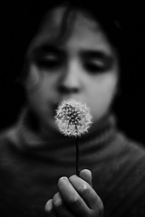 The girl and the dandelion (rvrossel) Tags: dandelion girl princess flowers hand blackandwhite blancoynegro noiretblanc bw fujixt10 fujixseries fujilovers fujishooters helios44m58mmf2 helios russianhelios