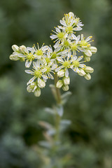 7P7A4727 (Mark Ritter) Tags: floral flora flowers closeup macro nature garden