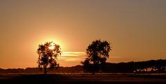Sunrise (Wouter de Bruijn) Tags: fujifilm xt1 fujinonxf90mmf2rlmwr sunrise sun dawn morning light shadow tree trees nature outdoor calm quiet zen serene middelburg walcheren zeeland nederland netherlands holland dutch landscape