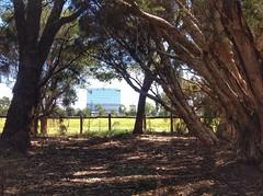 Bushes (sander_sloots) Tags: herdsman lake perth building bushes forest trees gums gombomen bomen gumtrees