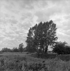 A glimpse from Vistula Lanscape Park (Other dreams) Tags: trees grass meadow vistulalandscapepark sunrise clouds landscape bw analogphotography film ilford fp4 id11 200asa xenotar orangefilter poland polska pomorze pomerania kociewie bratwin rolleiflex 35f