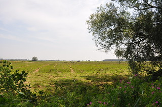 Acle and Damgate marshes (series)