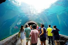 37 (樂活的大方) Tags: 20170724sb 新加坡動物園 river safari