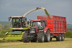 Claas Jaguar 870 SPFH filling a Broughan Engineering Mega HiSpeed Trailer drawn by a Case IH Puma 175 CVX Tractor (Shane Casey CK25) Tags: claas jaguar 870 spfh filling broughan engineering mega hispeed trailer drawn by case ih puma 175 cvx tractor cnh red casenewholland killeagh silage silage17 silage2017 grass grass17 grass2017 winter feed fodder county cork ireland irish farm farmer farming agri agriculture contractor field ground soil earth cows cattle work working horse power horsepower hp pull pulling cut cutting crop lifting machine machinery nikon d7100