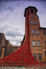 Poppy Tower (brianfagan) Tags: 2017 6d brianfagan brianfaganphotography canon derby derbyshire eos flood july mill nottingham poppies poppy red silkmill tour uk