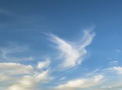 Cloud. (Gillian Floyd Photography) Tags: cloud formation wispy bird