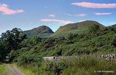 Dumgoyne (Rollingstone1) Tags: dumgoyne dumfoyne dumgoyach strathblane hills wood sky trees walk path outdoor flora drystanedyke campsiefells landscape scotland scenic scene stirlingshire countryside