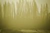 Goldenbarriletes. (liberusualis1) Tags: bandada vuelo pájaros grupo invierno atardecer frío ocaso oro dorado naturaleza andes villa campo fauna