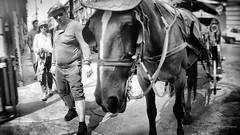 Tutti in posa (Angelo Trapani) Tags: cavallo carrozza carrozzella palermo street posa candid gnuri cocchiere calesse strada finimenti briglie cappello