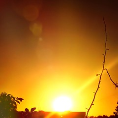 •Sunset today (sergiochubby) Tags: skyline skyscape sunlight foliage city ukraine sunset dawn warm colorful colourful happy mood cloud tranquility happyness outdoor landscape serene plant nostalgia tree leaves