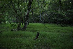Lone Post (dzmears) Tags: post fence tree trees grass green forest park peaceful landscape