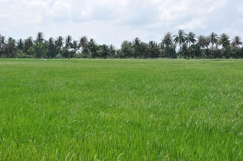 parc national sam roi yot - thailande 54