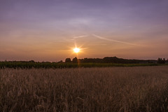 just before sunset (iwona.kilichowska) Tags: sun sunset sunlight light sunny scenery landscape countryside rural nature meadow fields sky poland sobiska lubelskie colours sunshine