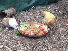 Tino + the chicks :)