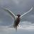 R thew (Birds & wildlife) icon