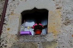 EN LA VENTANA (ameliapardo) Tags: ventana jaula canarios pajaros aves macetas fujixt1