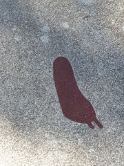 Gravures rupestres du site de Vitlycke, 14 juillet 2017. (Guillaume Cingal) Tags: 14juillet2017tanum vitlycke rupestre suède tanum