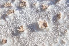 Mushroom (KayleeBennett) Tags: macromondays memberschoicetexture mushroom