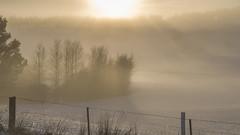 Icy silence (Ian@NZFlickr) Tags: snow mist sunrise over hill trees shadows fence mahineraangi road otago nz