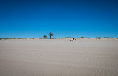 Playa de El Prat (efe Marimon) Tags: canonpowershots120 felixmarimon catalunya barcelona elpratdellobregat playa parquenatural palmeras