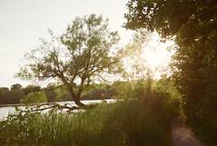 summertime (buttercup caren) Tags: disposablecamera filmcamera filmphotography rollfilmweek summertime lomography peterborough ontario