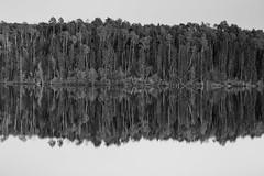 Boreal Black and White (matthewkaz) Tags: zigzaglake zigzag lake water reflection reflections borealforest borealforestofcanada tree trees evergreen aspen forest woods wildernessnorth fishcamp fishing ontario canada bw blackandwhite 2017