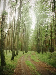 forest path (Darek Drapala) Tags: path forest nature trees lumix light leaves botanic panasonic poland polska panasonicg5 village country green