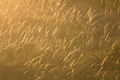 Summer grass (ArtGordon1) Tags: summer evening london england uk walthamstow davegordon davidgordon daveartgordon davidagordon daveagordon artgordon1 grass