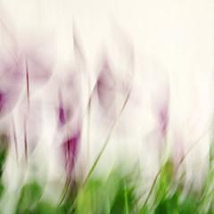 Whispering (Photofinish 2009) Tags: whiserings icm movement motion blur intentionalcameramovement