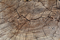Textura da madeira (Claudia Mendes2015) Tags: abstrato abstrata abstract textura madeira cinza