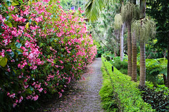 2017 SPM1747 Jardim Tropical Monte Palace (Monte Palace Tropical Garden) in Funchal, Madeira, Portugal (teckman) Tags: 2017 botanicalgardens flower funchal jardimtropicalmontepalace madeira portugal pt