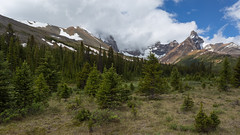 Step into the Wild, Alberta (Ken Krach Photography) Tags: albertacanada banffnationalpark jaspernationalpark
