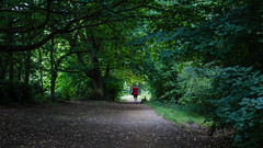 A walk in the woods (PhredKH) Tags: photosbyphredkh phredkh fredkh outdoorphotography outdoors woods parks londonparks man shaded trees shadows shadowsandlight ground urbanparks london alexandrapalace canon canoneos canonphotography ef50mmf18stm canoneos5dmarkiii
