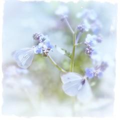 Butterflies (Sue90ca Rain In The Morning) Tags: canon 6d butterflies slidersunday