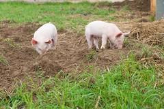 GoUrban_170727_Farm_125