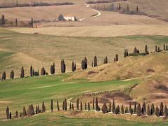 Toscane (Jolivillage) Tags: jolivillage toscane tuscany toscana sienne siena italie italia italy europe europa paysage paesaggio landscape arbres alberi trees geotagged picturesque