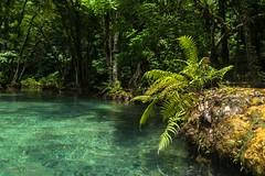 Semuc Champey (allabar8769) Tags: agua bosque guatemala helechos selva semuc champey