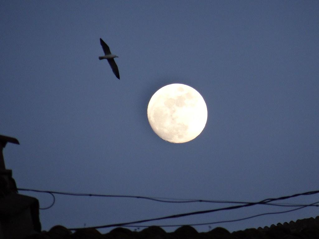 nasa night sky mezza luna - photo #29