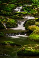 Tremont Irish Green Cascade (Reid Northrup) Tags: smokys nationalpark tennessee cascades moss rocks gsmnp reidnorthrup nikon water stream creek forest landscape nature longexposure green trees